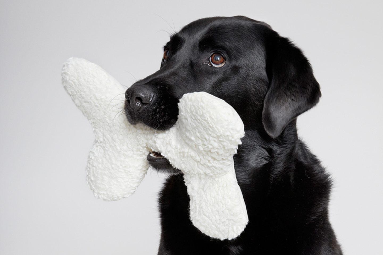 Cloud 7 Onlineshop für Hunde-Accessoires